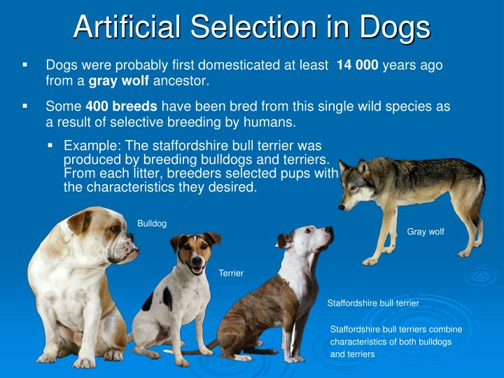 Ppt Stages Of Natural Selection Powerpoint Presentation Id6313231