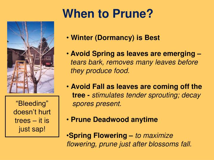 When to Prune?