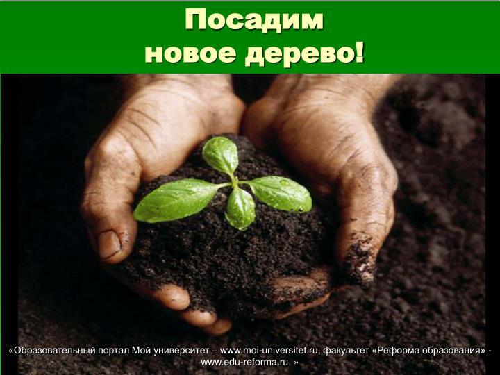 Посадим