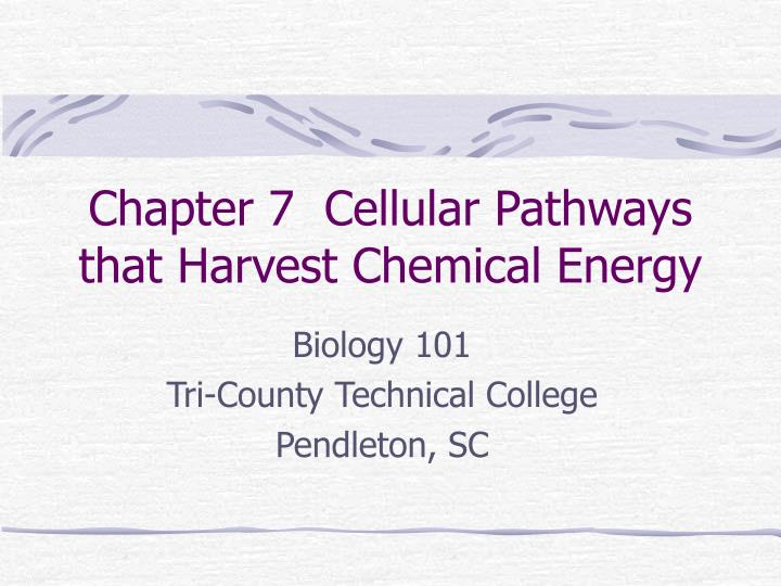 chapter 7 cellular pathways that harvest chemical energy
