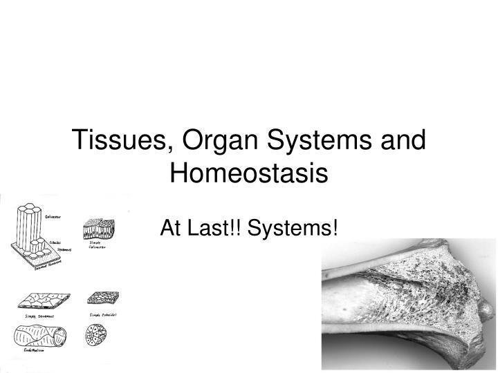 tissues organ systems and homeostasis n.