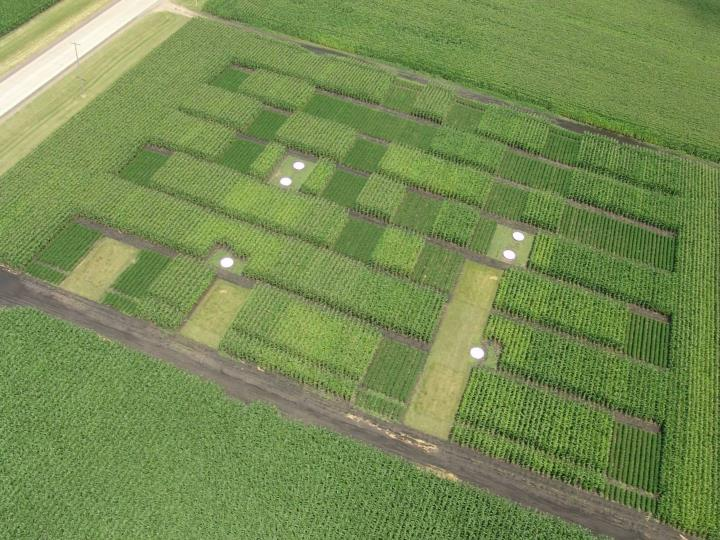Long term field research for developing nitrogen bmp s