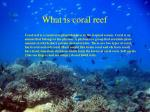 what is coral reef
