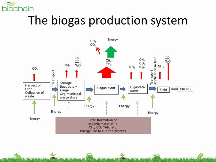 The biogas production system