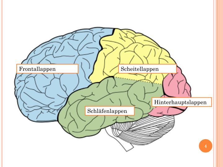 PPT - Ist das Gehirn schuld an ADHS? PowerPoint Presentation - ID ...