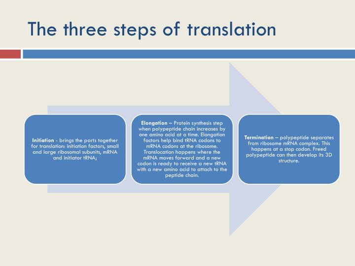 The three steps of translation