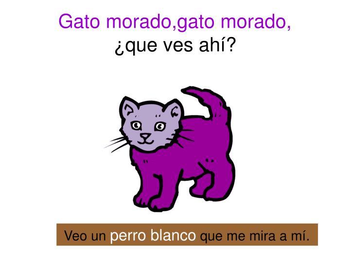 Gato morado,gato morado,