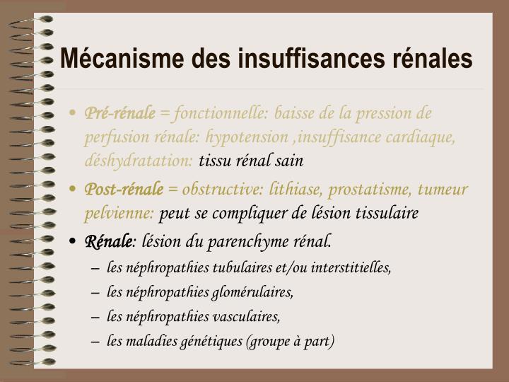 PPT - Les Néphropathies PowerPoint Presentation - ID:6333606