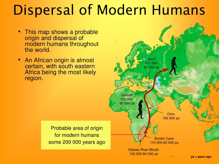 the fossil evidence and the multi regional continuity model of the human evolution What does the fossil evidence say what does the genetic evidence say how  does the assimilation model blend elements of these two hypotheses  the  multiregional continuity model15 contends that after homo erectus left africa   portions of the old world, regional populations slowly evolved into modern  humans.