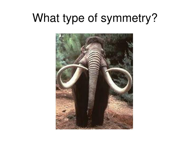What type of symmetry?