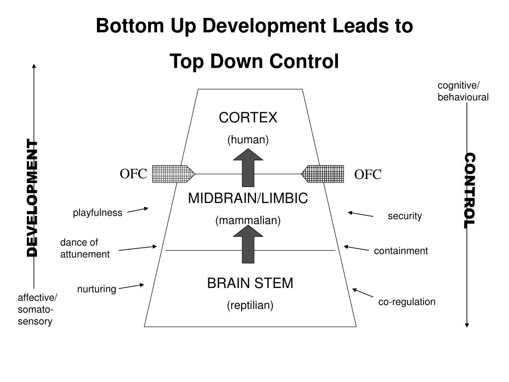 Bottom up and top down development