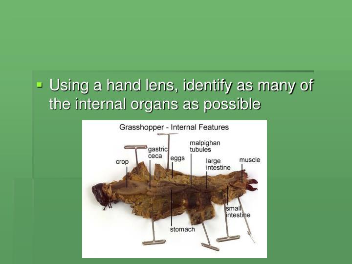 Ppt Dissection Of A Grasshopper Powerpoint Presentation Id6337076
