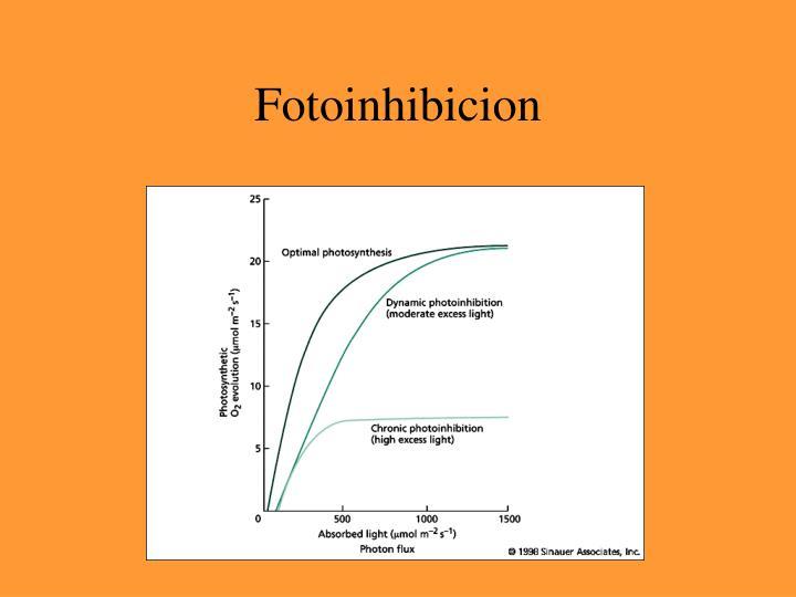 Fotoinhibicion