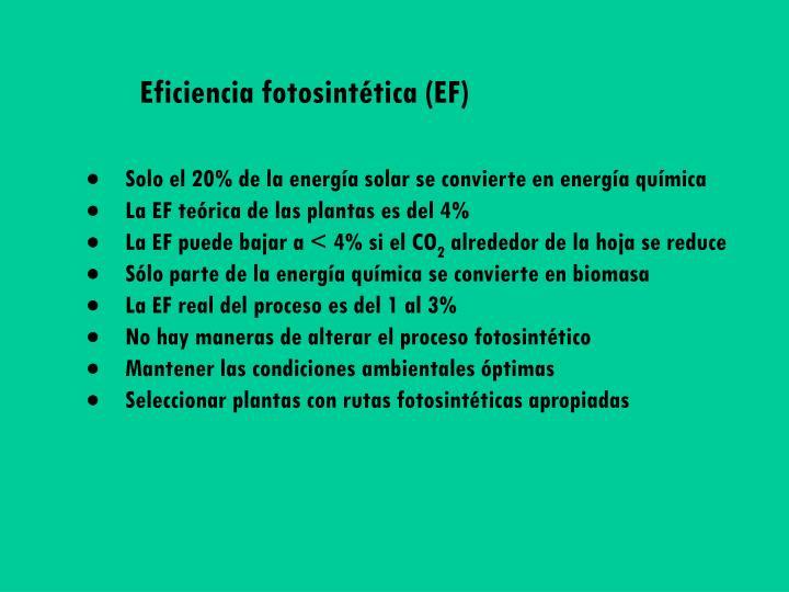 Eficiencia fotosintética (EF)