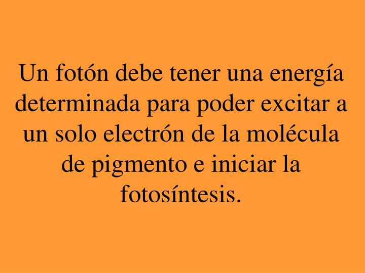 Un fotón debe tener una energía determinada para poder excitar a un solo electrón de la molécula de pigmento e iniciar la fotosíntesis.