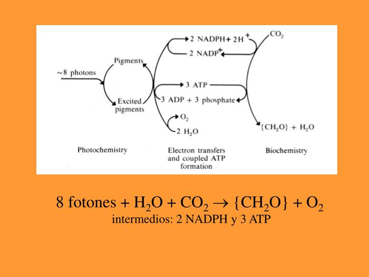 8 fotones + H