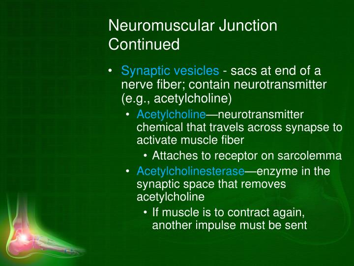 Neuromuscular Junction Continued