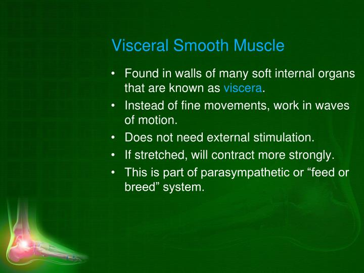 Visceral Smooth Muscle