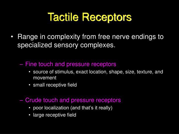 Tactile Receptors