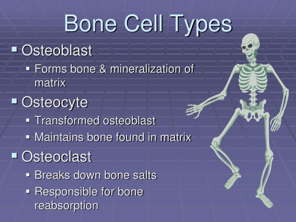 PPT - Metabolic Bone Disorders PowerPoint Presentation ...