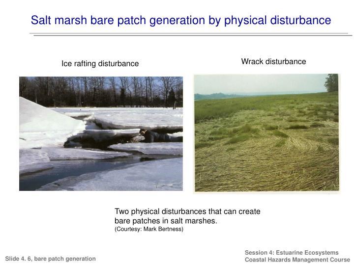 Salt marsh bare patch generation by physical disturbance