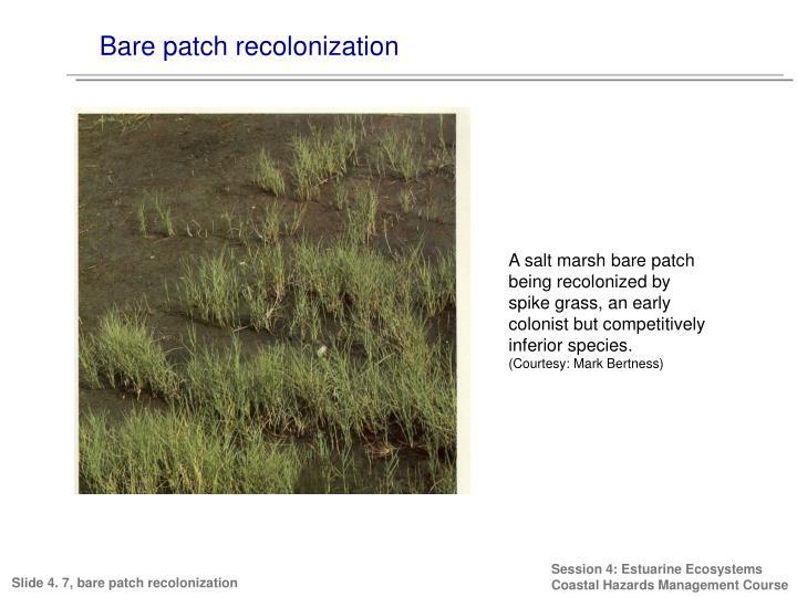 Bare patch recolonization