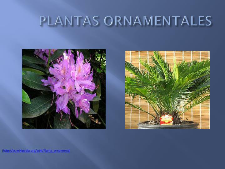 Ppt plantas powerpoint presentation id 6347681 for Significado de ornamental wikipedia