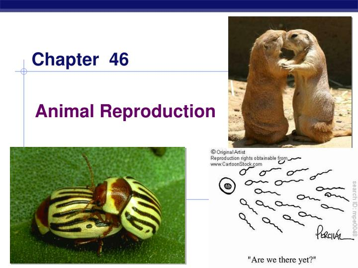 an investigation of reproduction and development in animals With the acceptance that the health of animals integrated diagnostic laboratory investigation of and professional development.