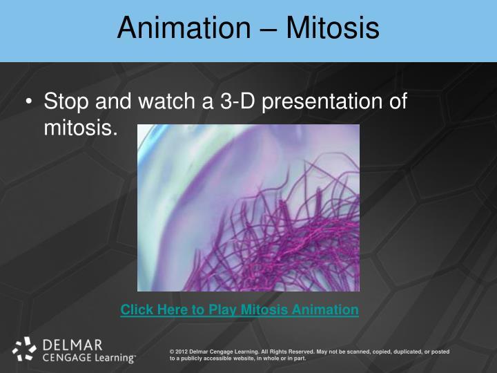 Animation – Mitosis
