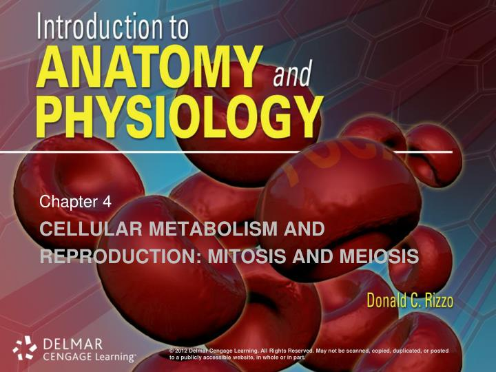Cellular metabolism and reproduction mitosis and meiosis