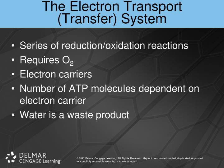 The Electron Transport (Transfer) System