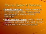 nervous system stretching