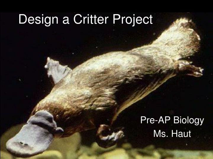design a critter project n.