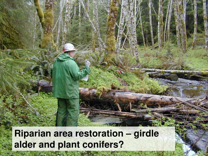 Riparian area restoration – girdle alder and plant conifers?