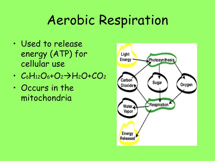Used to release energy (ATP) for cellular use