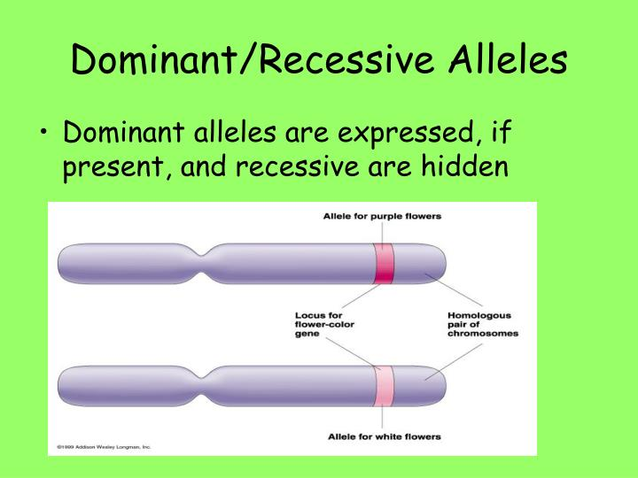 Dominant/Recessive Alleles