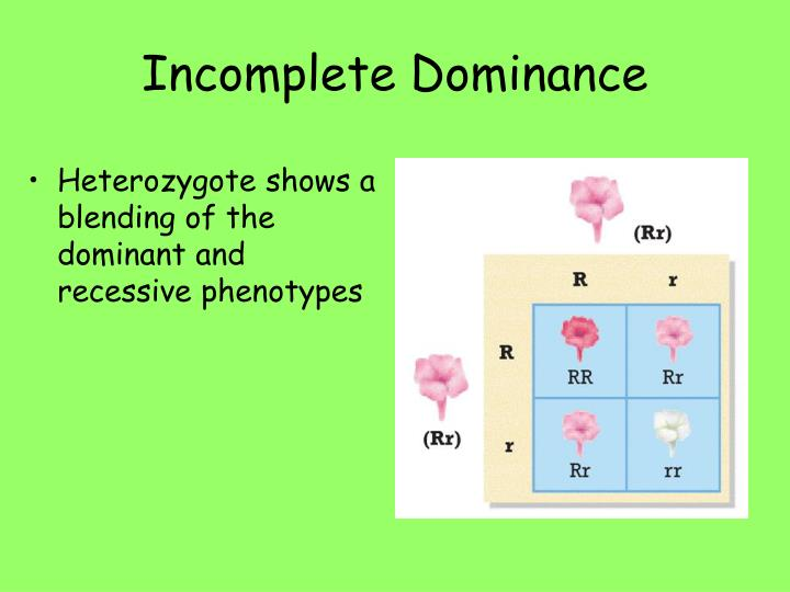 Heterozygote shows a blending of the dominant and recessive phenotypes