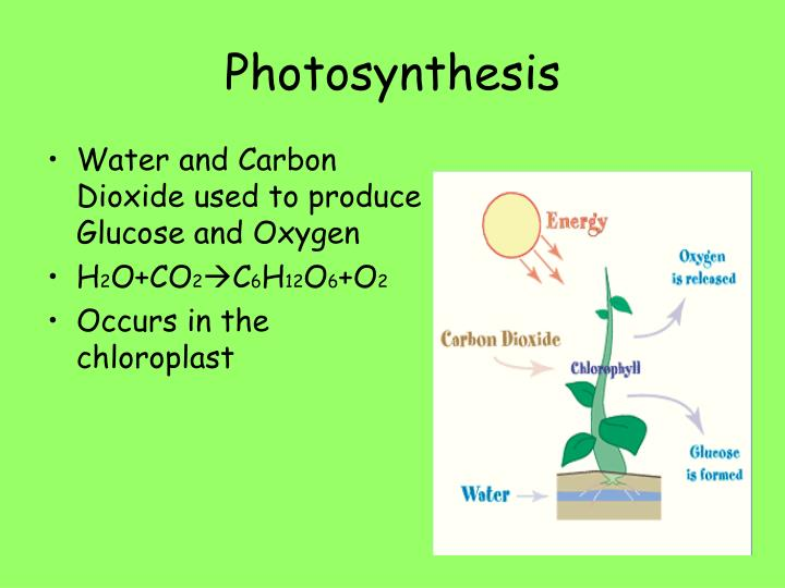 Water and Carbon Dioxide used to produce Glucose and Oxygen