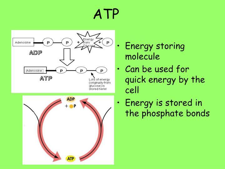 Energy storing molecule