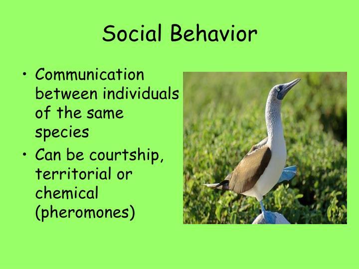 Social Behavior