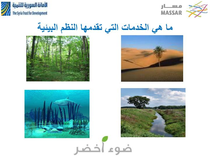ما هي الخدمات التي تقدمها النظم البيئية
