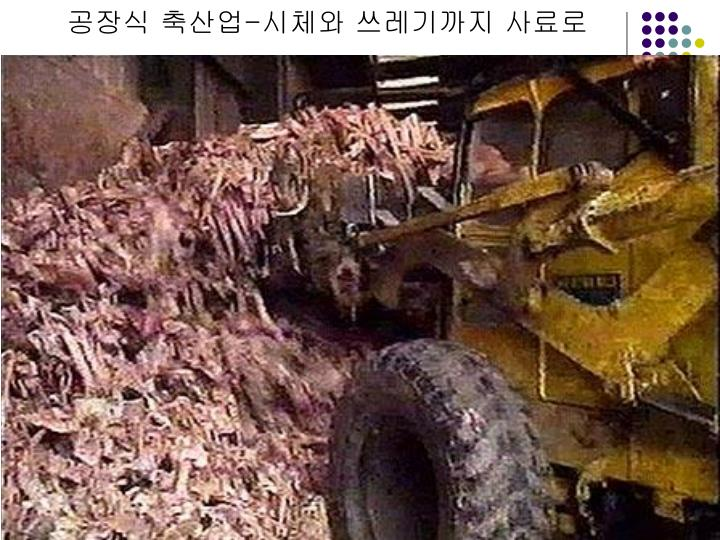 공장식 축산업