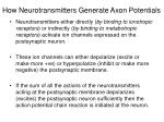 how neurotransmitters generate axon potentials