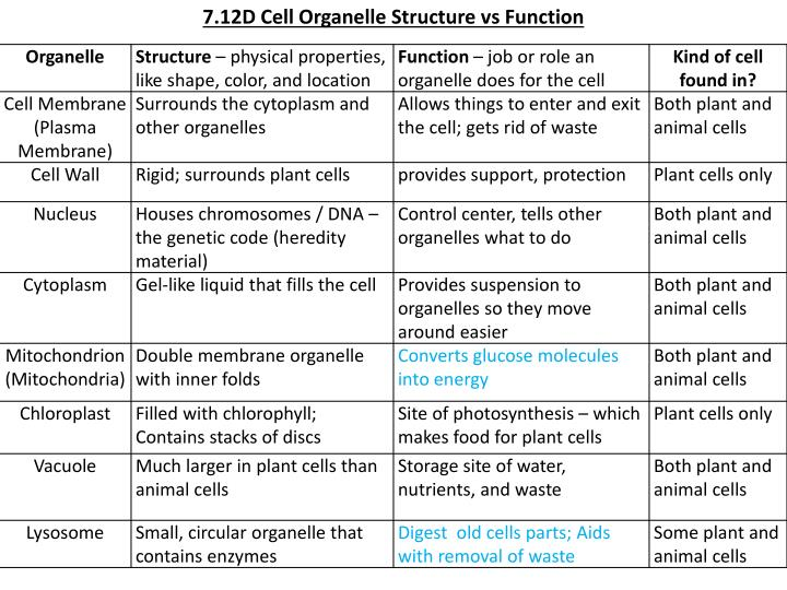 PPT - 7.12D Cell Organelle Structure vs Function ...