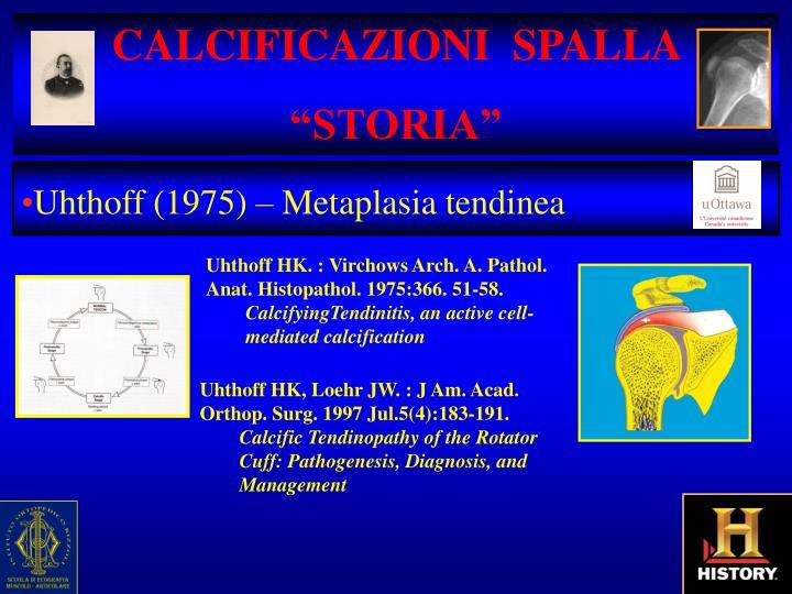 CALCIFICAZIONI  SPALLA