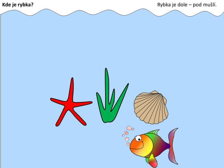Kde je rybka?