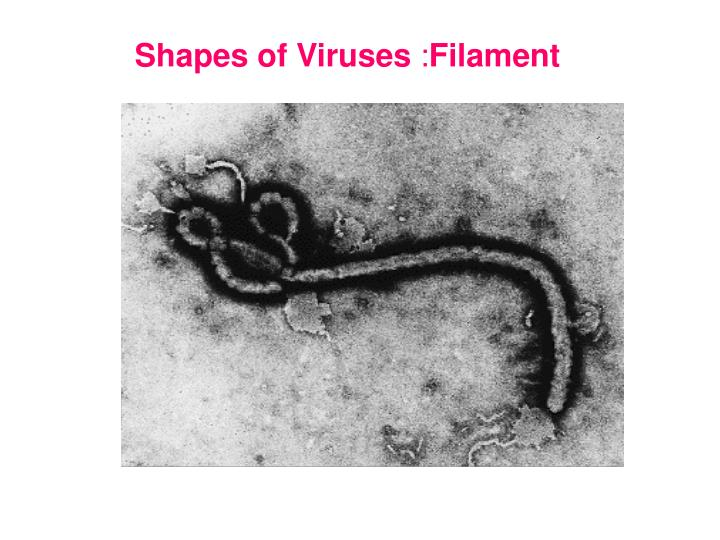 Shapes of Viruses