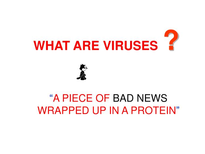 WHAT ARE VIRUSES