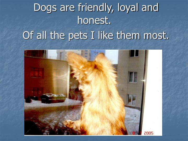 Dogs are friendly, loyal and honest.