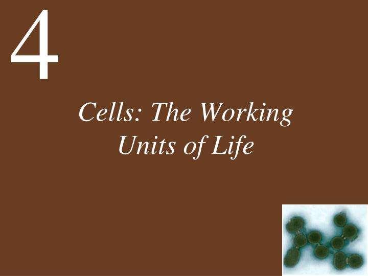 cells the working units of life n.